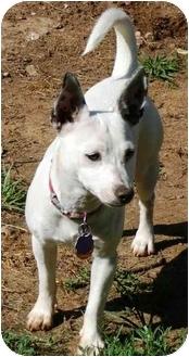 Jack Russell Terrier Mix Dog for adoption in Harrah, Oklahoma - Travler