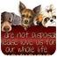 Photo 3 - Australian Shepherd Mix Dog for adoption in Zanesville, Ohio - # 370-10 @ Animal Shelter