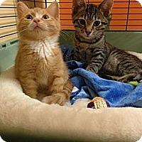 Adopt A Pet :: Willy - batlett, IL