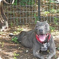 Adopt A Pet :: Pepper - Conyers, GA