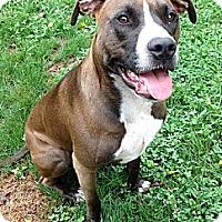 Adopt A Pet :: Tara - Mount Juliet, TN