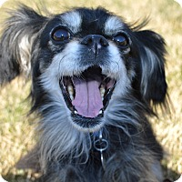 Adopt A Pet :: Monkey - Marietta, GA