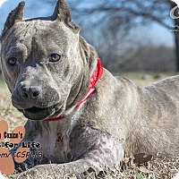 Adopt A Pet :: Gidget - Colleyville, TX