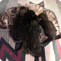 Adopt A Pet :: Sabrina - Hamilton, ON