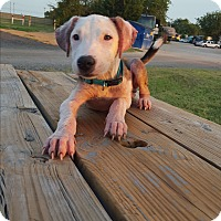 Adopt A Pet :: Chance -Courtesy post - Burleson, TX
