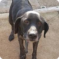 Adopt A Pet :: Basha - San Francisco, CA