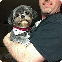 Adopt A Pet :: Fauna - Troy, MI