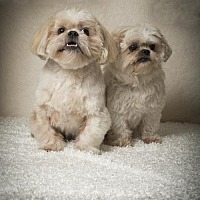 Adopt A Pet :: Fat Boy & Daisy - Davie, FL