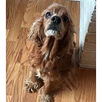 Adopt A Pet :: LIESL - LaGrange, KY