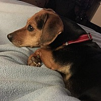 Adopt A Pet :: Maggie - Winder, GA