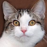 Adopt A Pet :: Squirt - Renfrew, PA