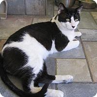 Adopt A Pet :: Frank - Sherman Oaks, CA