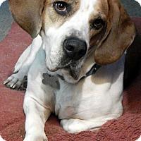 Adopt A Pet :: MOOSE - Pennsville, NJ