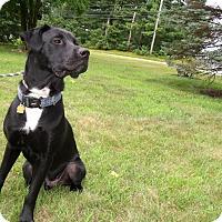 Adopt A Pet :: Django - LAKEVILLE, MA