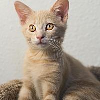 Adopt A Pet :: Adam - Montclair, CA