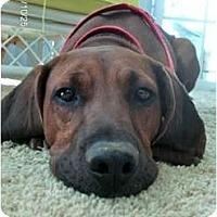 Adopt A Pet :: Monty - Dallas, TX