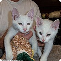 Adopt A Pet :: Chaser & Piere - Acme, PA