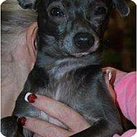 Adopt A Pet :: Miles - Oceanside, CA