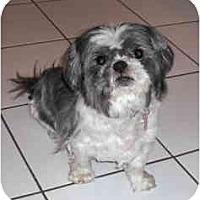 Adopt A Pet :: Spooky - Warren, NJ