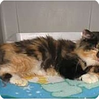 Adopt A Pet :: Christie - Shelton, WA