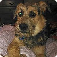 Adopt A Pet :: Tigger - San Antonio, TX