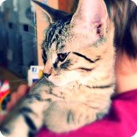 Adopt A Pet :: Nighttime - Green Bay, WI