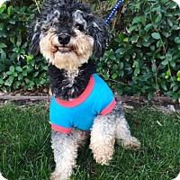 Adopt A Pet :: ERNIE, cute video! - Irvine, CA