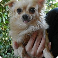 Adopt A Pet :: Eduardo (Eddie) - Escondido, CA