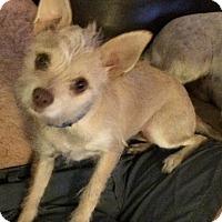 Adopt A Pet :: Dandy - Los Angeles, CA