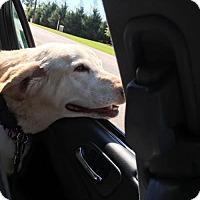 Adopt A Pet :: Minnie-ADOPTION PENDING - Murrells Inlet, SC