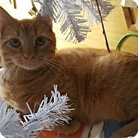 Adopt A Pet :: Fanta - Virginia Beach, VA