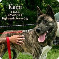 Adopt A Pet :: Kami - Toms River, NJ