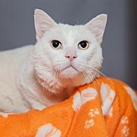 Adopt A Pet :: Parmesan - Mission Hills, CA