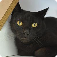 Adopt A Pet :: Samuel - Kettering, OH