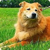 Adopt A Pet :: Donald - N - Huntington, NY