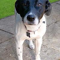 Adopt A Pet :: Peasy - Sarasota, FL