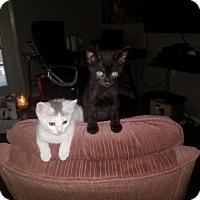 Adopt A Pet :: Jeanie A430366 - San Antonio, TX