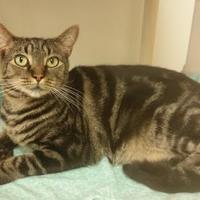 Adopt A Pet :: Macy (Merritt Island Adoption Center) - Cocoa, FL