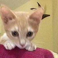 Adopt A Pet :: Deke - Eureka, CA