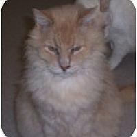 Adopt A Pet :: King - El Cajon, CA