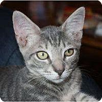 Adopt A Pet :: Billy (LE) - Little Falls, NJ