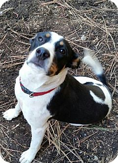 Collie Mix Dog for adoption in Grass Valley, California - Millie
