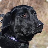 Adopt A Pet :: Kelly - Cincinnati, OH