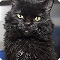 Adopt A Pet :: Gypsy - Lombard, IL