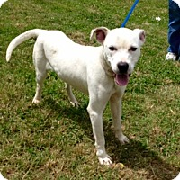 Adopt A Pet :: CHASE - Bedminster, NJ