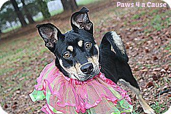 Terrier (Unknown Type, Medium) Mix Dog for adoption in Paducah, Kentucky - Sadie Hawkins