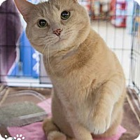 Adopt A Pet :: Alex - Merrifield, VA