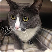 Adopt A Pet :: Olive - Newport Beach, CA