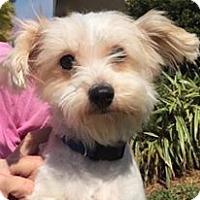 Adopt A Pet :: Myzo - Orlando, FL