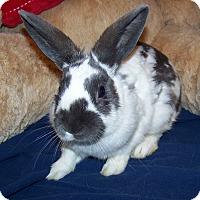 Adopt A Pet :: Berdie - Alexandria, VA